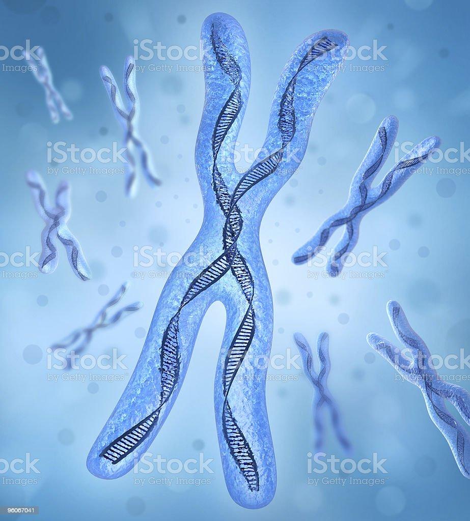 Chromosome x, DNA Strands stock photo