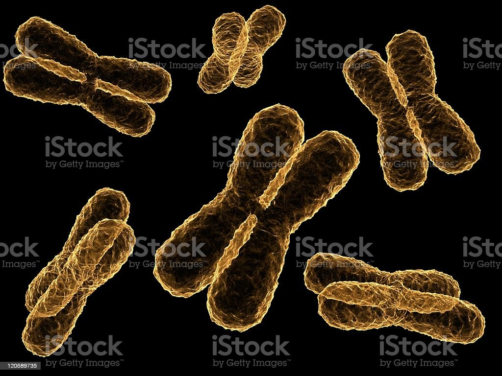 chromosomes royalty-free stock photo