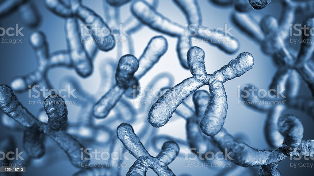 Chromosomes stock photo