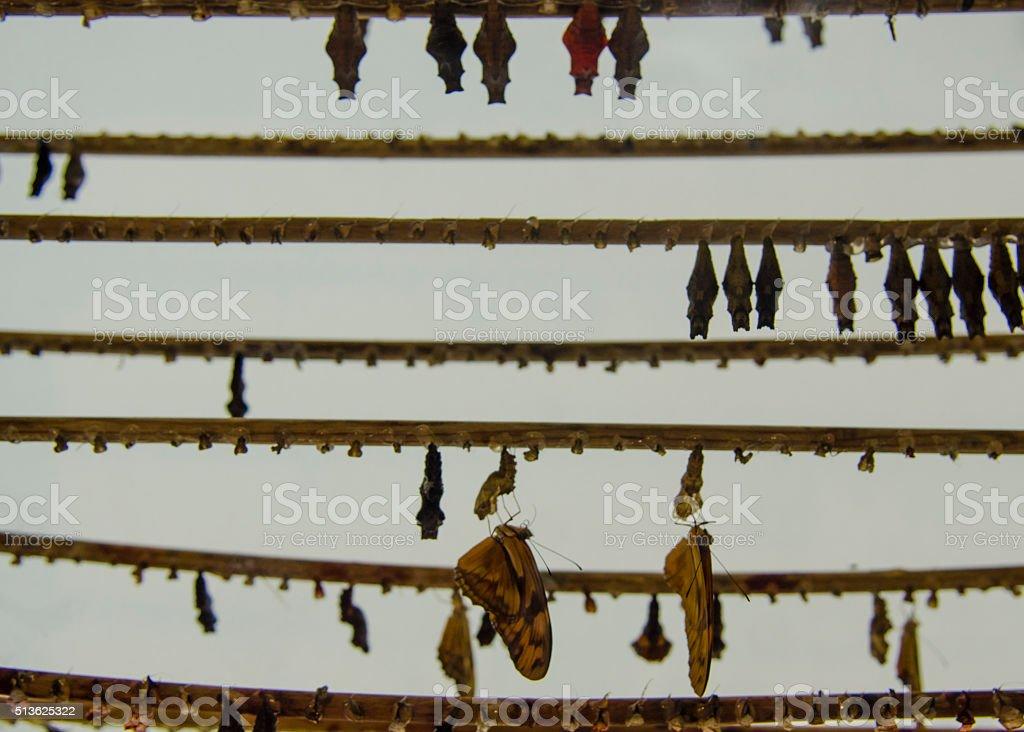 Chrysalis Farm stock photo