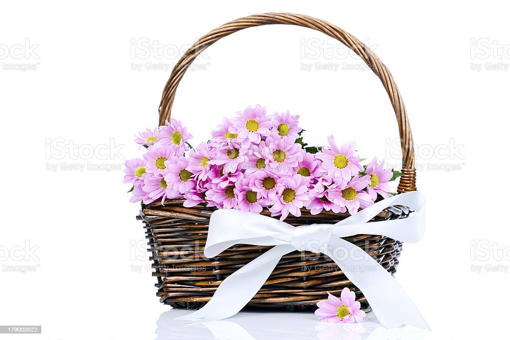Chrysanthemum flowers in the basket royalty-free stock photo