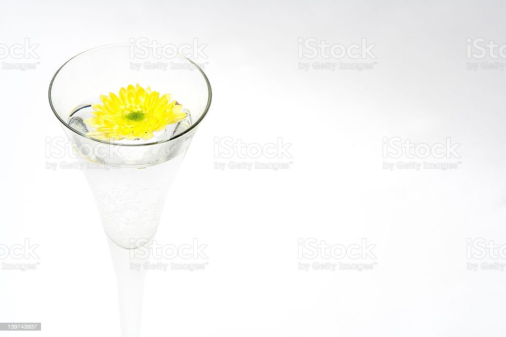 Chrysanthemum in water royalty-free stock photo