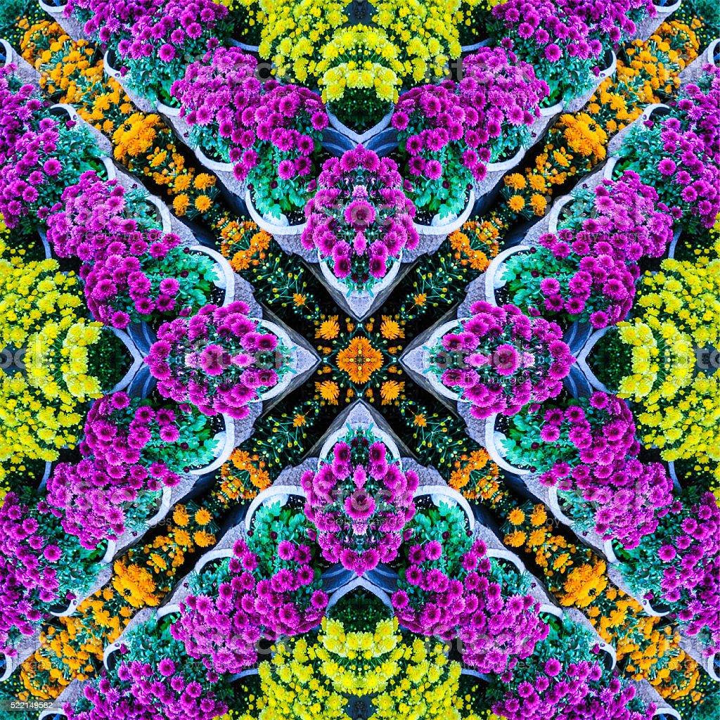 Chrysanthemum Mandala stock photo