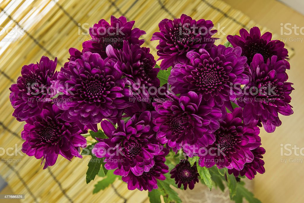 Chrysanthemums flower on table royalty-free stock photo