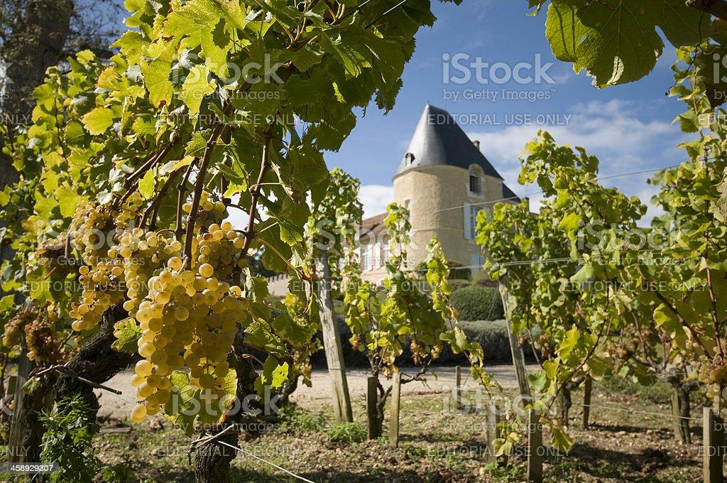 Château d'Yquem stock photo