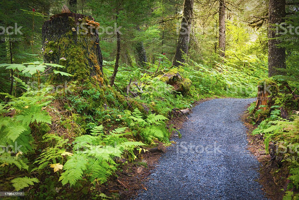Chugach Forest stock photo