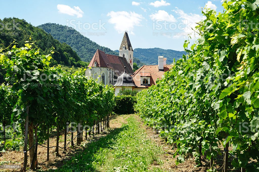 Church between Vine Branch stock photo