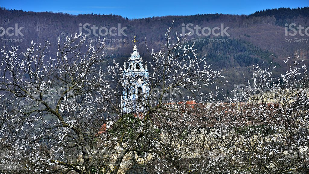 Church of Dürnstein in Lower Austria with apricots stock photo