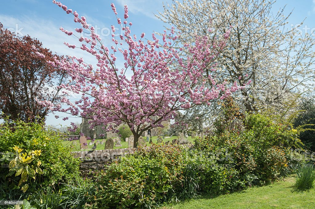 churchyard blossom stock photo