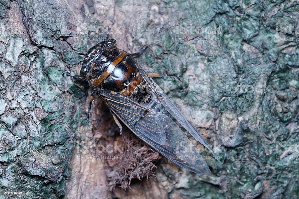 Cicada close up photo stock photo
