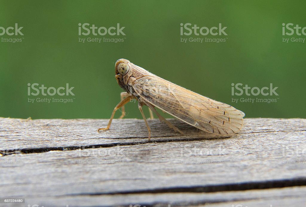 cicada on tree stock photo