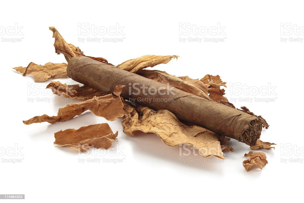 Cigar and dry  tobacco. stock photo