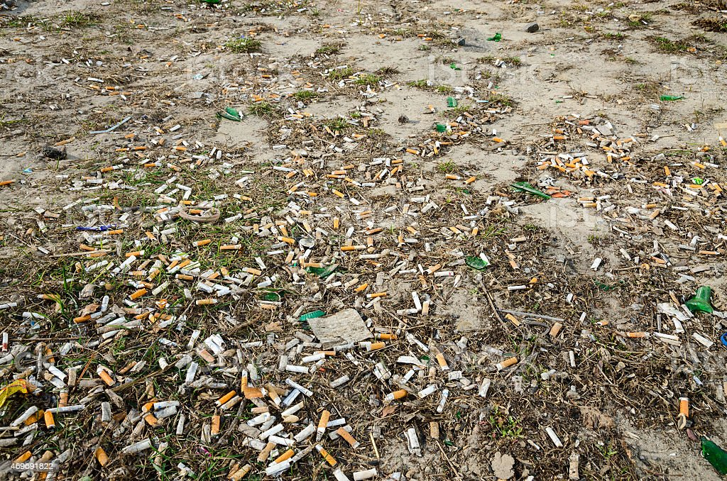 Cigarette butts on the lawn of the city in the spring stock photo