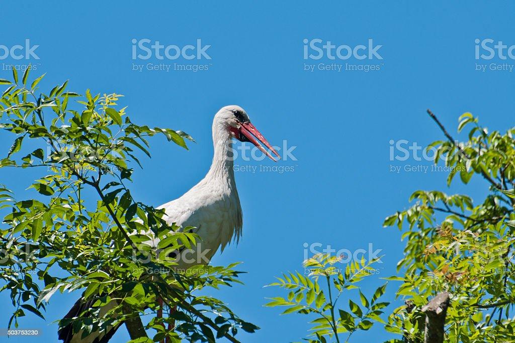 Cigogne stock photo
