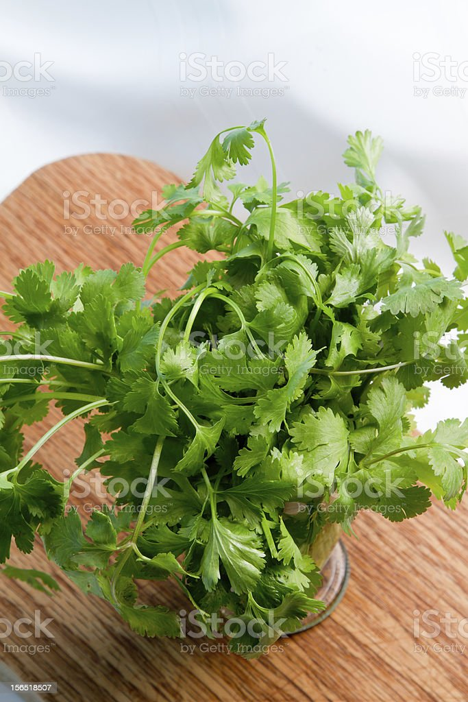 Cilantro Bunch royalty-free stock photo