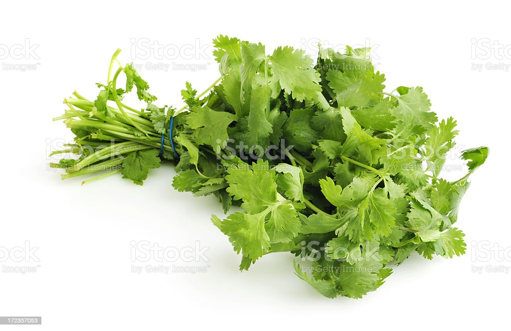 Cilantro Herb Bouquet Bunch Isolated Cut Out on White Background royalty-free stock photo