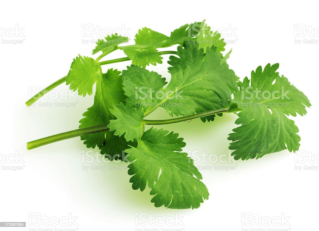 Cilantro Leaves,  Herb Vegetable Sprigs Isolated on White Background royalty-free stock photo