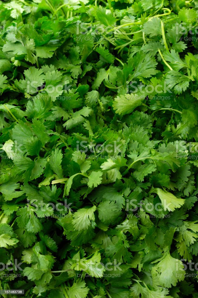 Cilantro on Display in a Produce Market stock photo