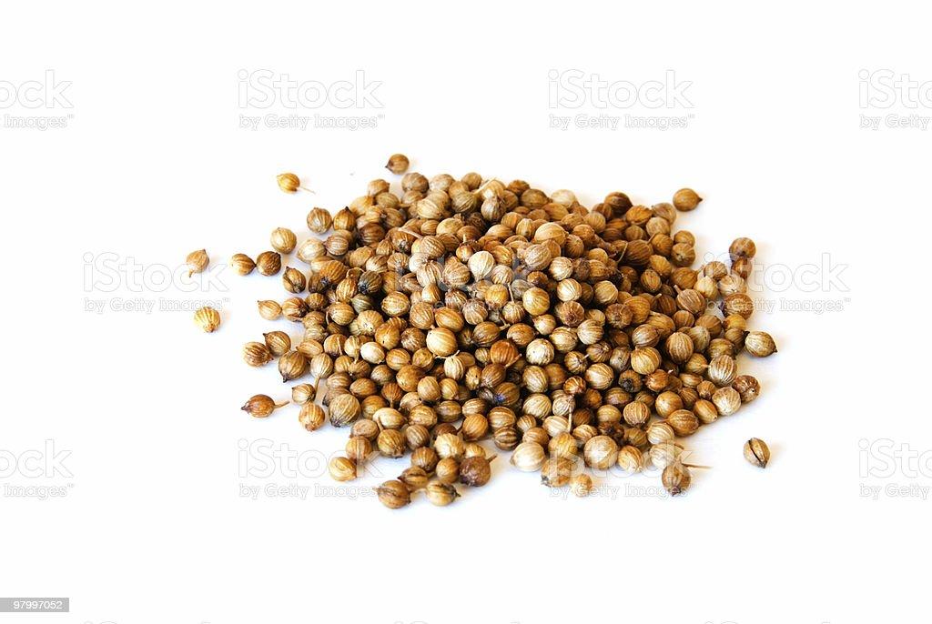 Cilantro Seeds on white royalty-free stock photo