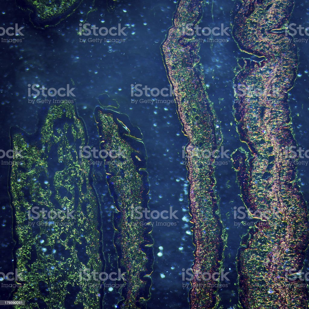 cilliated epithelium tissue stock photo
