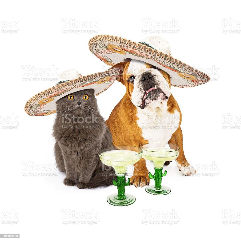 Cinco De Mayo Cat and Dog stock photo