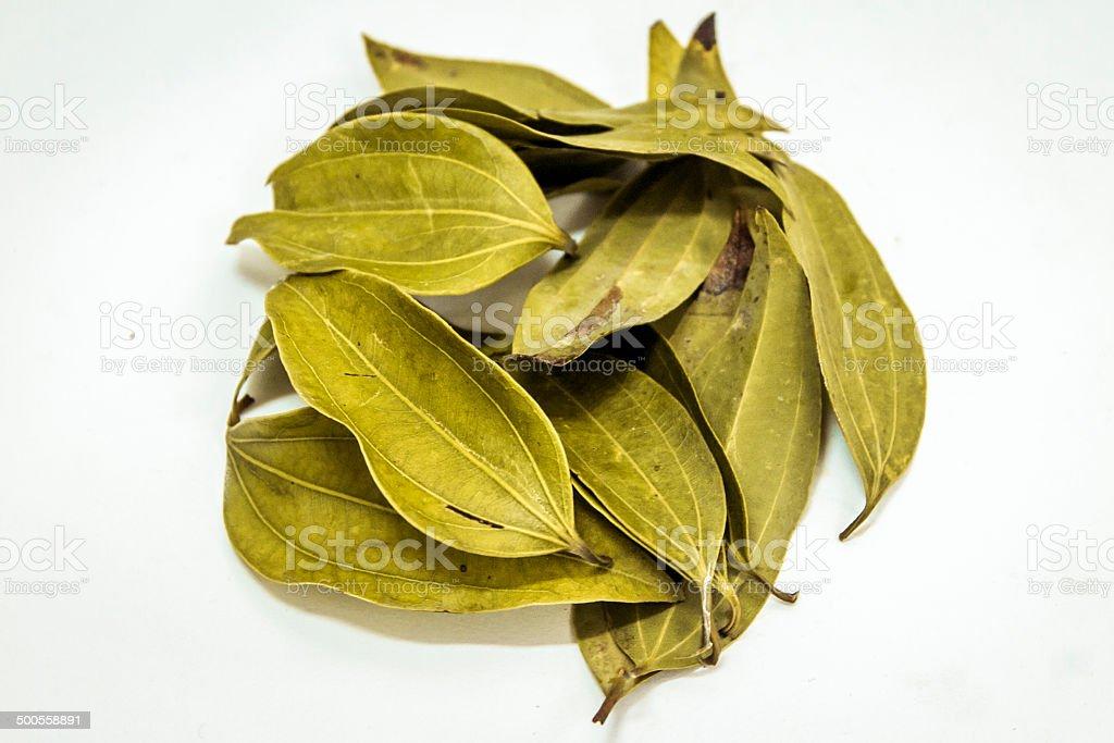 Cinnamomum tamala, Indian bay leaf, also known as tejpat stock photo