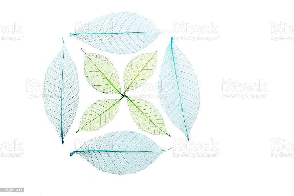 Circle and cross of skeleton leaves on white stock photo
