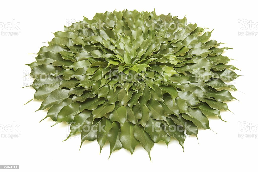 Circle of green leaves stock photo