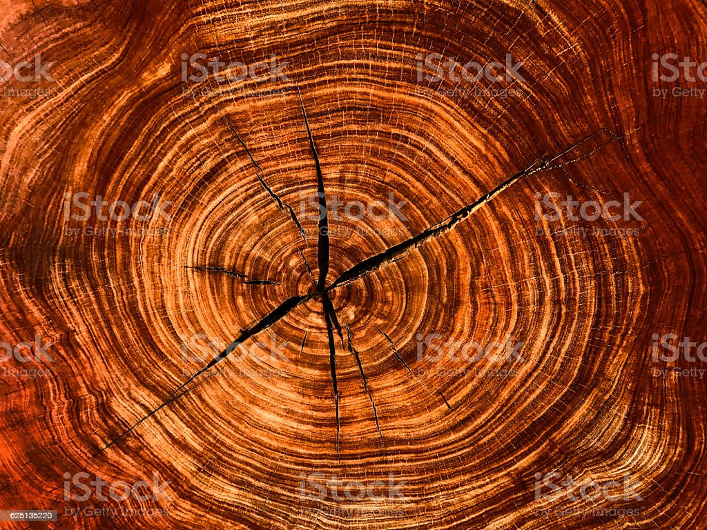 Circle of Life Tree Section Rings stock photo
