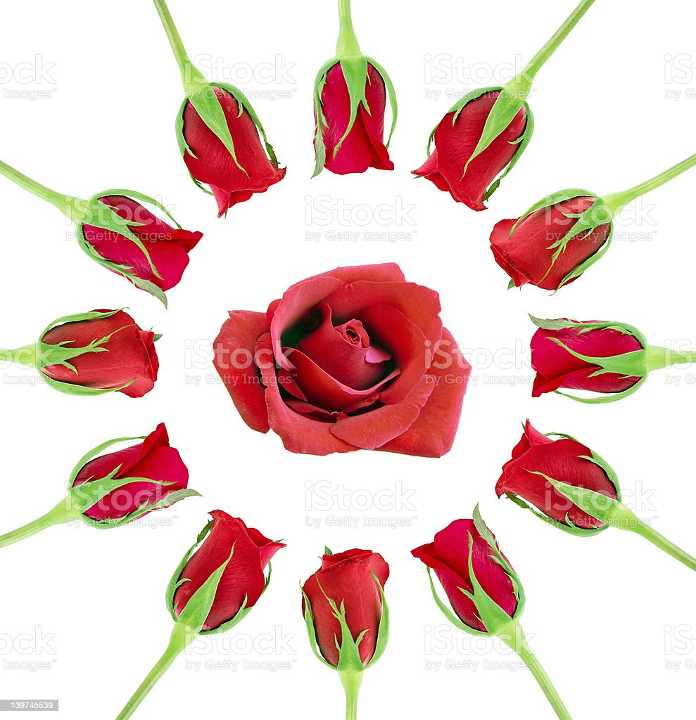 circle of roses royalty-free stock photo