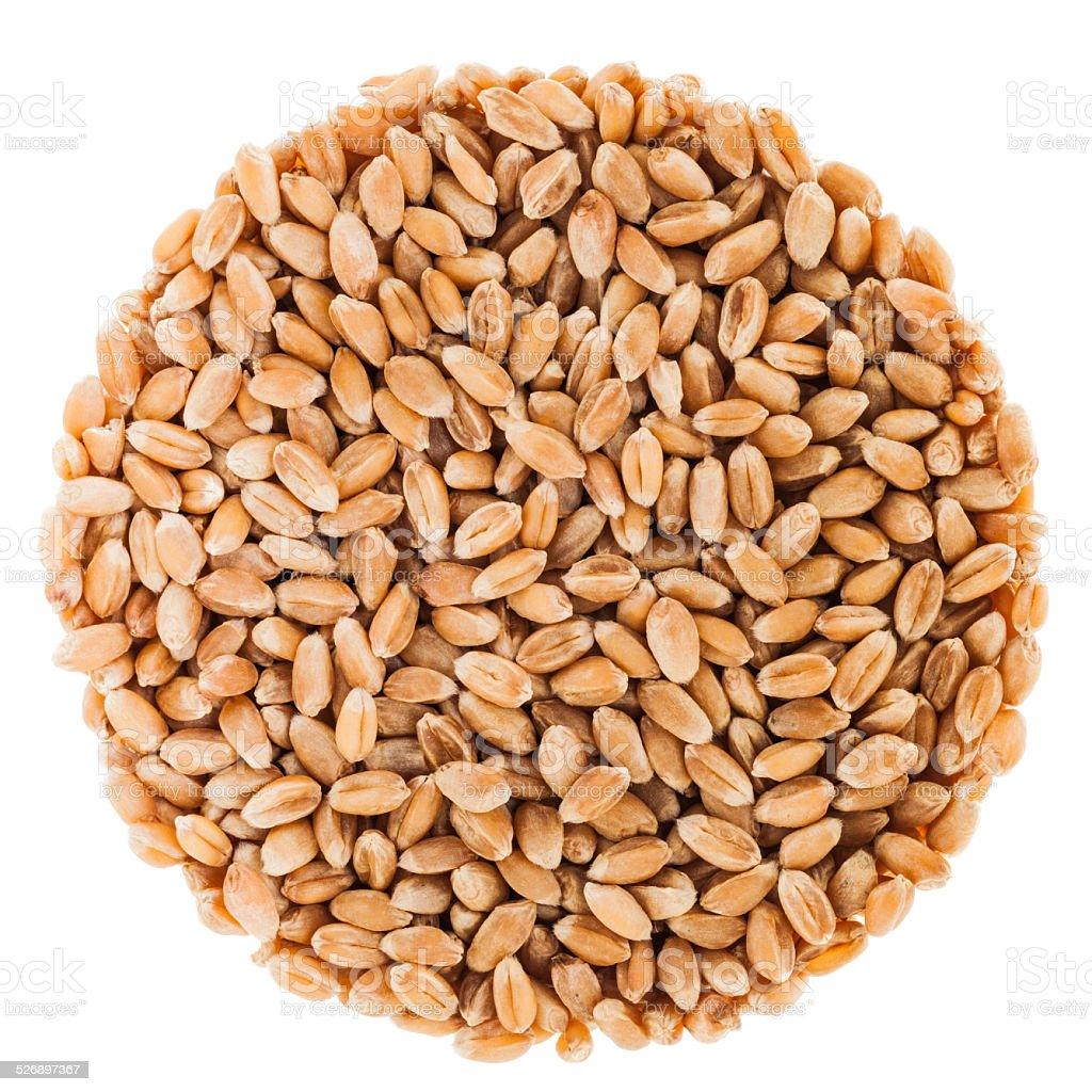 Circle of wheat seeds Isolated on White Background stock photo
