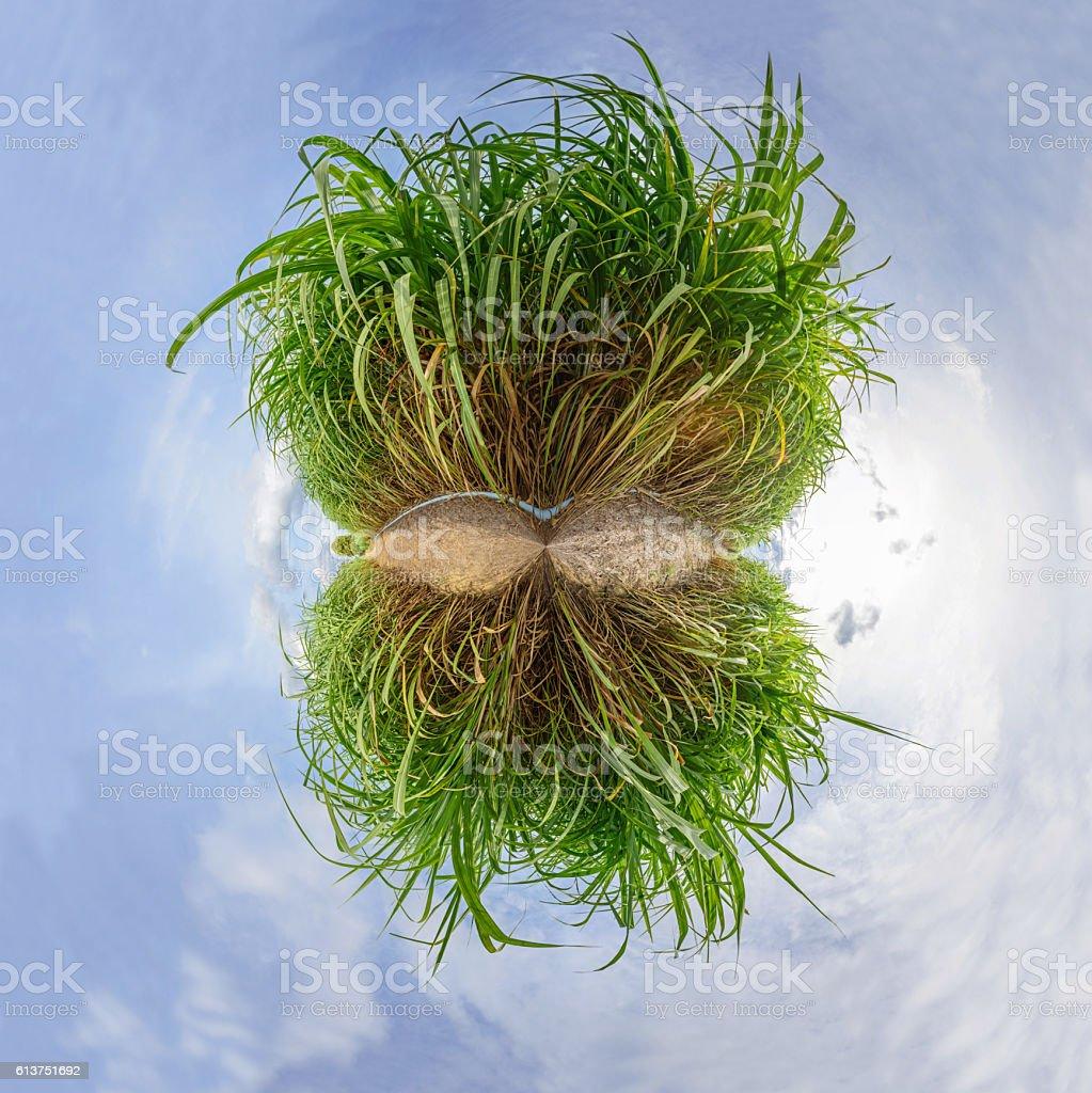 Circle panorama of Sugarcane stock photo
