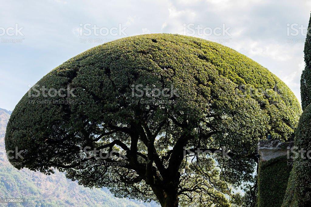 Circle top tree stock photo