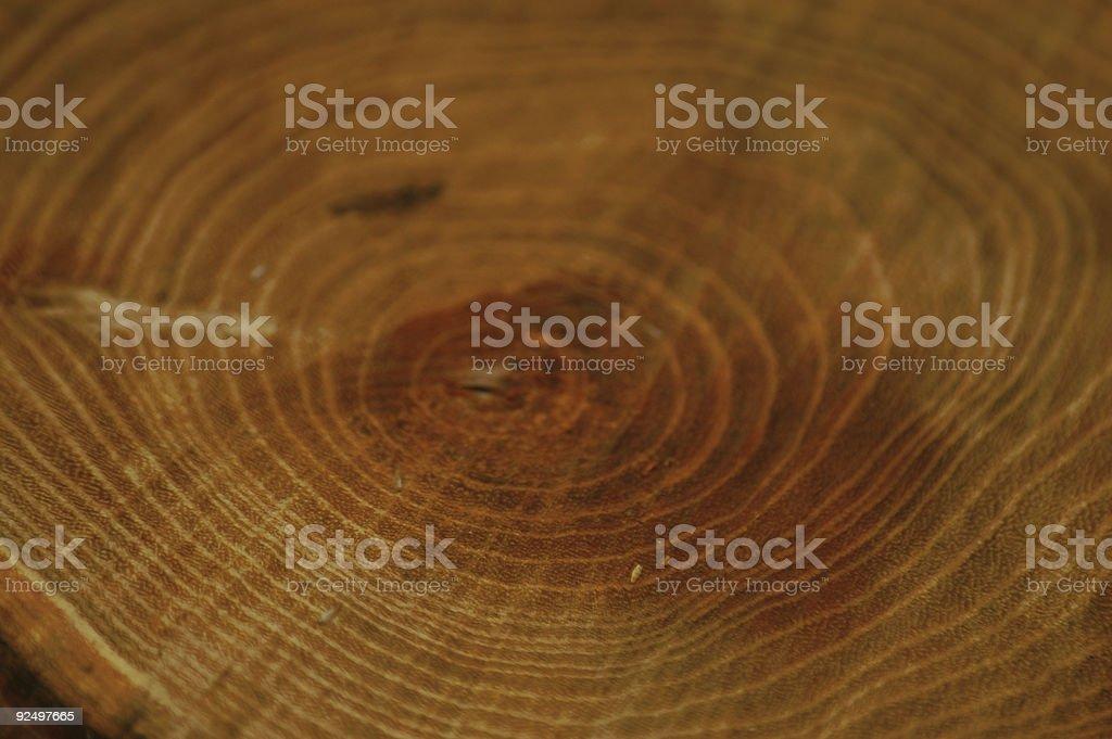 circles of the tree\'s life