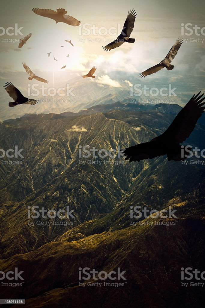 Circling Vultures stock photo