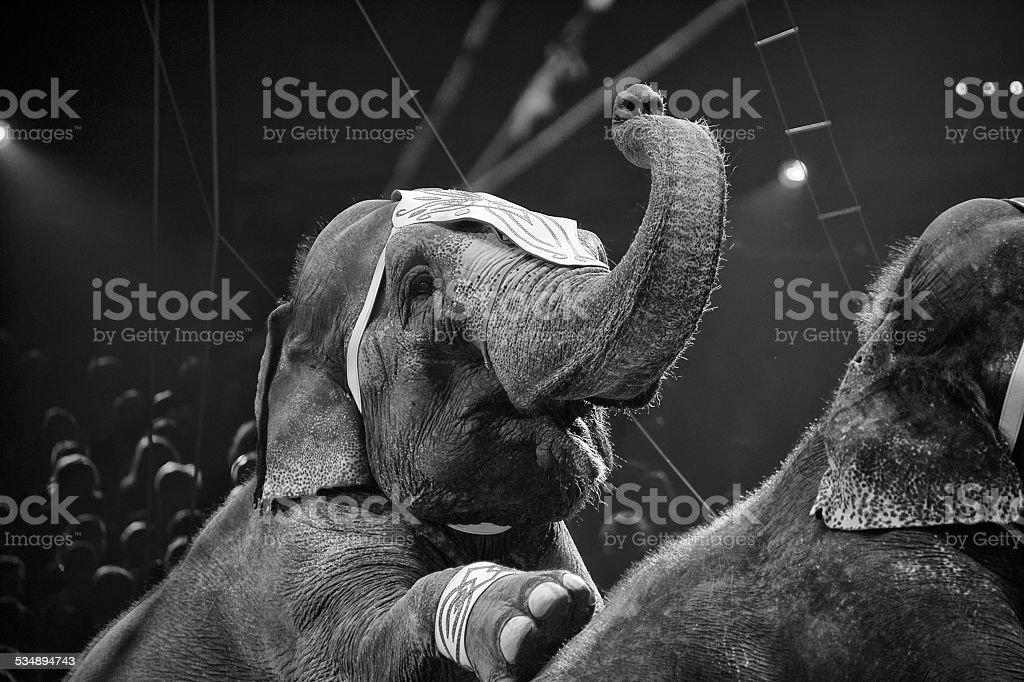 circus elephant on black background stock photo