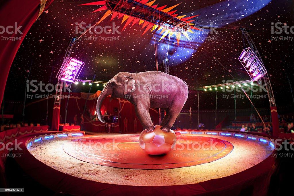 Circus elephant stock photo