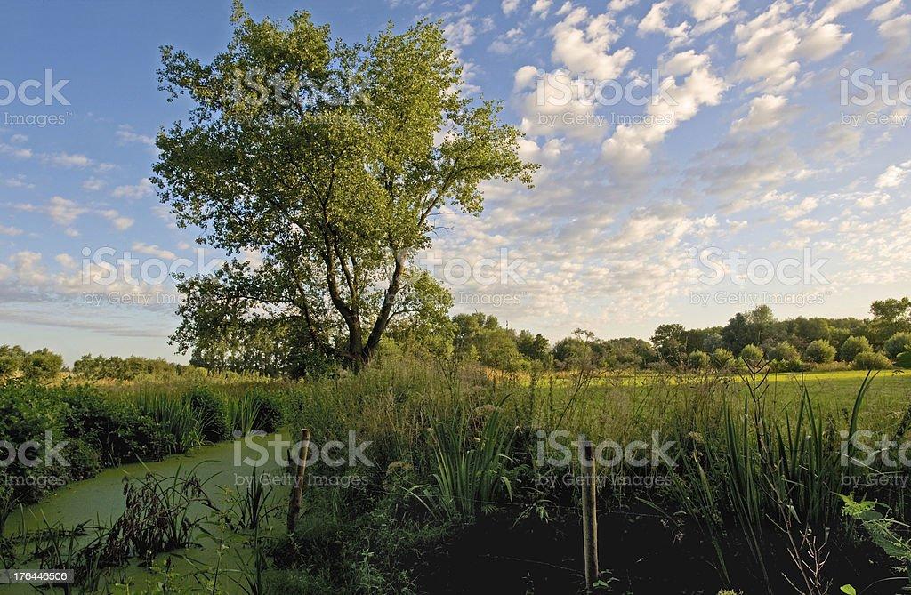 Cirrus clouds over wetlands near Ghent, Belgium stock photo