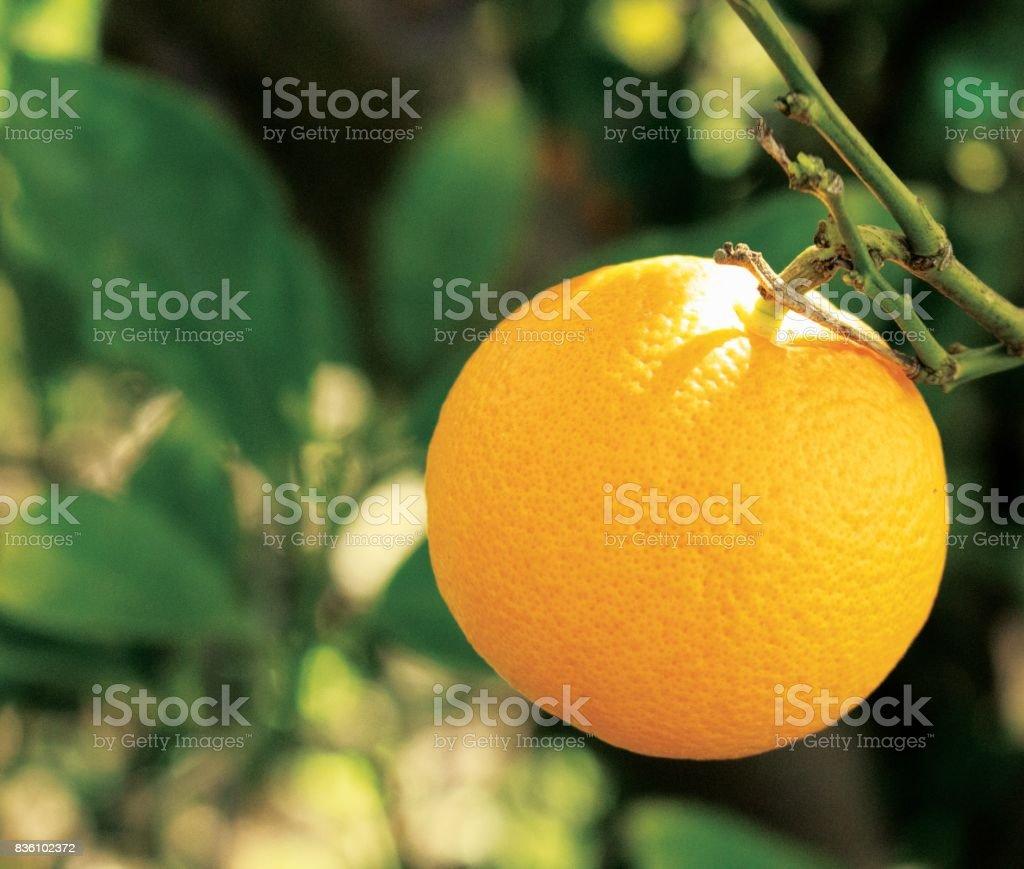 Citrus Delight stock photo