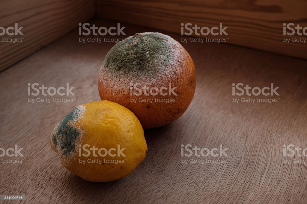 citrus fruits with green mold. stock photo