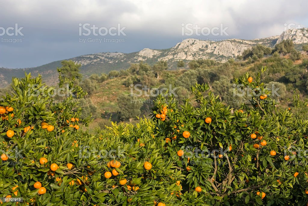 citrus mandarin fruit, organic food and drink photo royalty-free stock photo