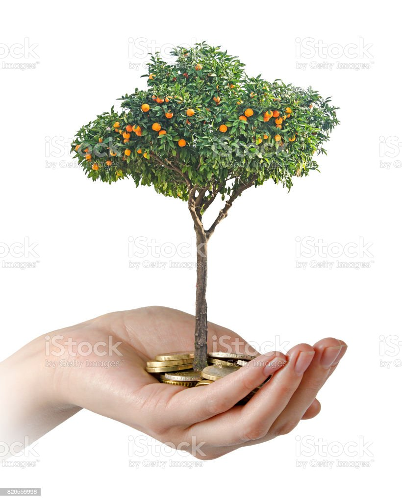 Citrus sapling growing from pile of coins stock photo
