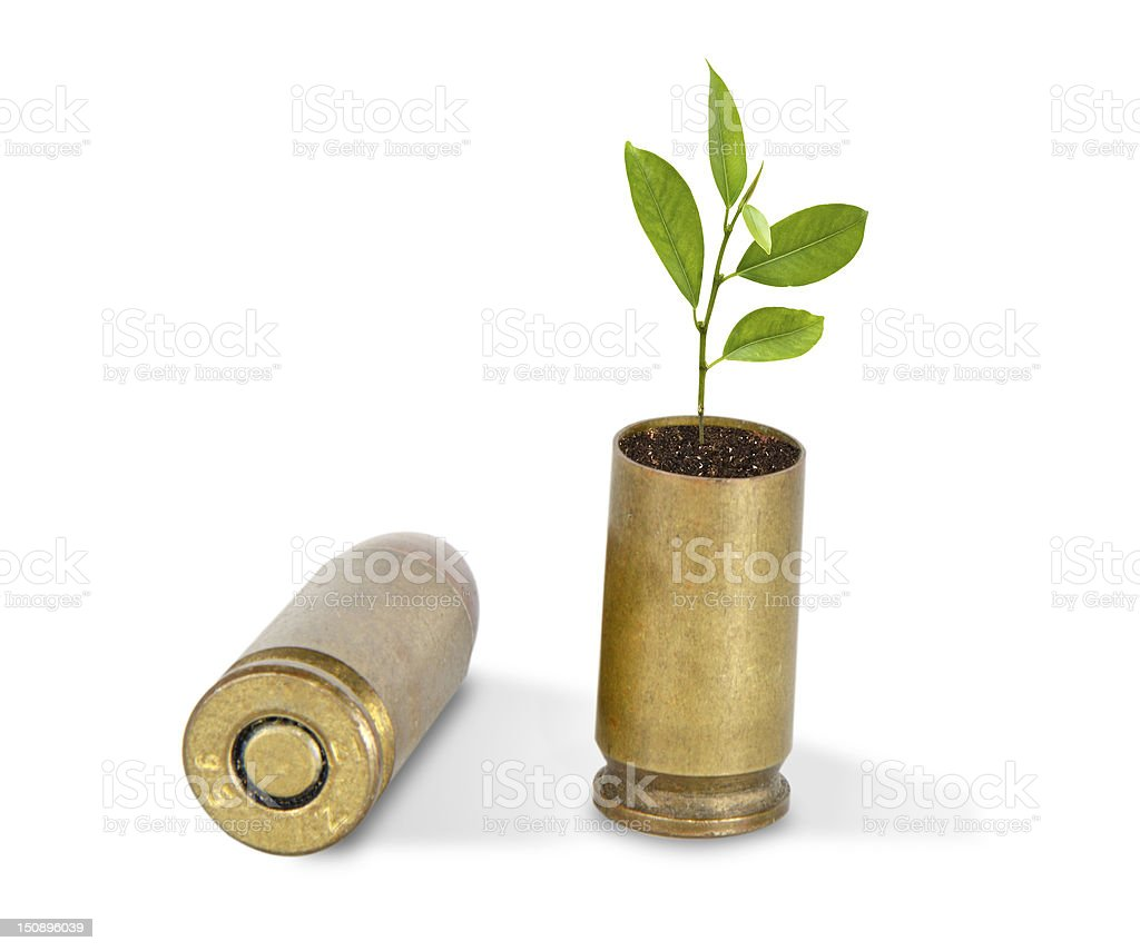 Citrus sapling growing from shells stock photo