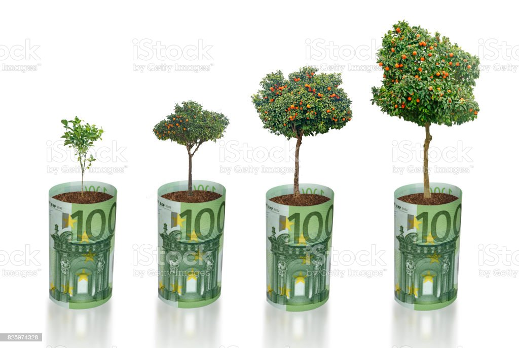 Citrus trees growing from euro bill stock photo