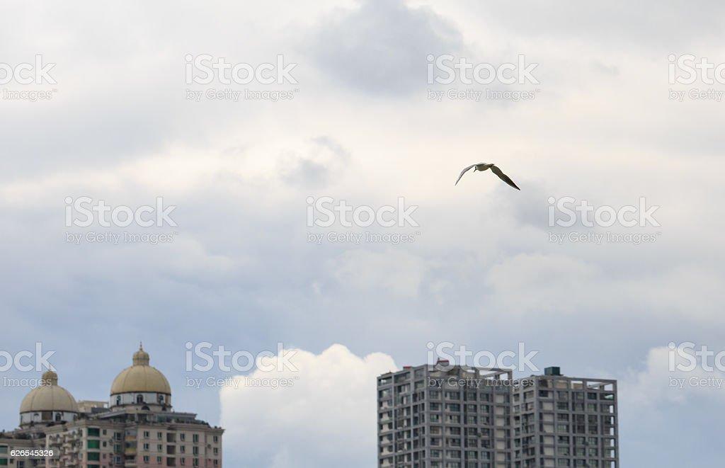 City and bird stock photo