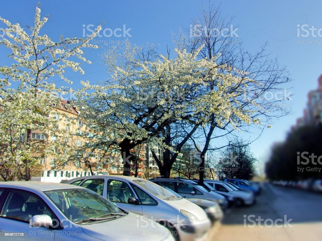 963-  City and nature stock photo