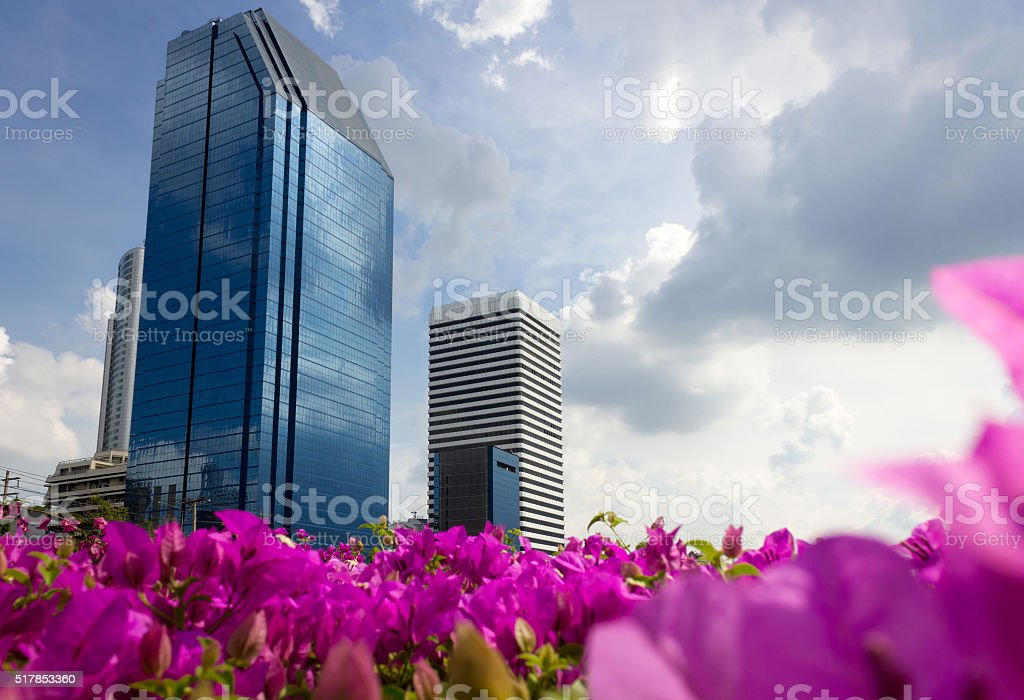 City ant view and pink flower foreground stock photo