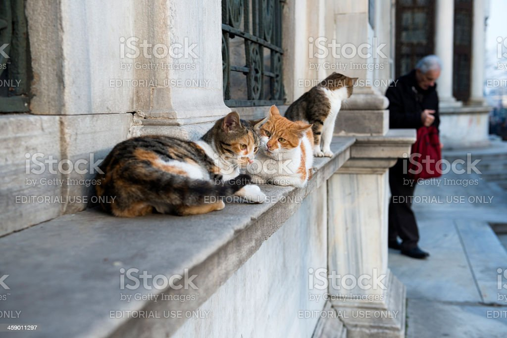 City cats with attitude in Istanbul, Turkey royalty-free stock photo