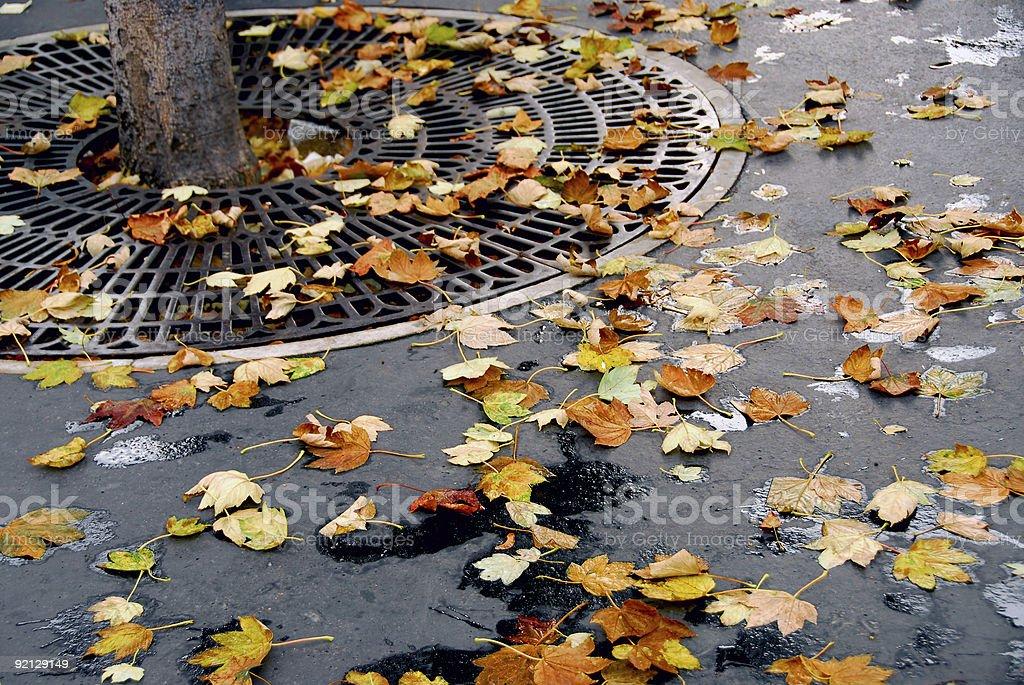 City fall royalty-free stock photo