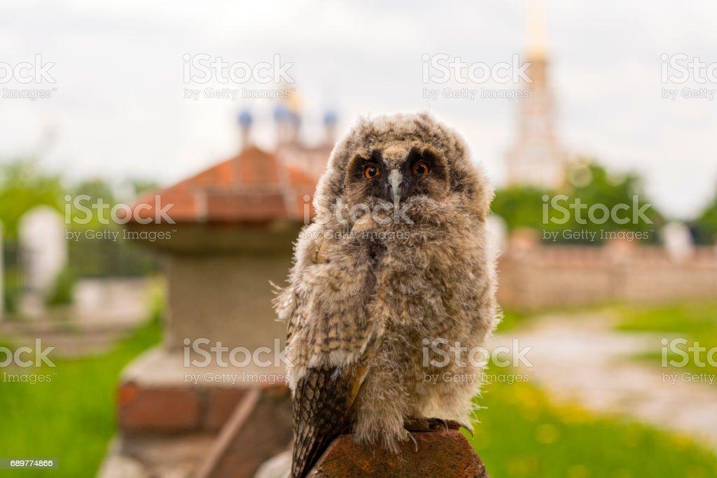 City guard, small owl stock photo